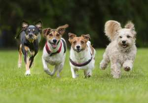 Dogs breed- India Tv