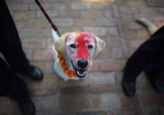 A police dog stands with a garland of flowers and vermillion powder smeared on its forehead during Tihar festival celebrations at a police kennel division in Kathmandu, Nepal, Saturday, Oct. 29, 2016. Dogs are worshipped to acknowledge their role in providing security during Tihar festival, one of the most important Hindu festivals that is also dedicated to the worship of the goddess of wealth Laxmi.