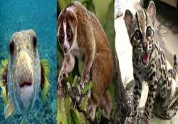 world s 15 living beings which look attractive but may kill
