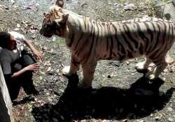 family of youth killed by tiger wants justice
