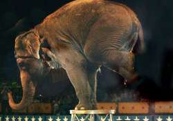 elephants still being subjected to torture in circuses peta