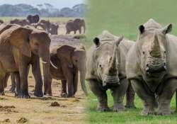 revealed elephants rhinos polar bears on the brink of