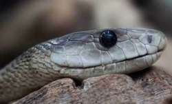 No road, 65-year-old woman bitten by snake carried 8 km on