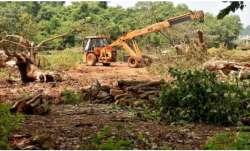 Aarey forest tree felling