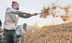 wheat procurement