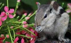 Squirrel tests positive for bubonic plague in US (Representational image)