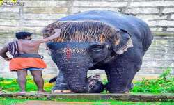 Meet 'Bob-Cut' Sengamalam: The Tamil Nadu elephant known sporting most adorable hairstyle