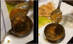 Muh se nikala hai yeh bite: Delhi man finds lizard in sambar at Saravana Bhavan restaurant, shares v