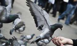 After heated debate over spitting in front of neighbour's house, Man kills pigeons to avenge insult