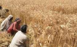 MSP hike, Minimum Support Price, Rabi crop, farm bills