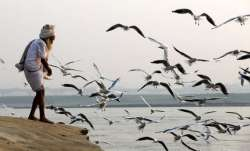 Bird flu: 983 more birds die in Maharashtra, state death toll soars to 5,151