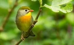 Vastu Shastra: Putting picture of bird in this direction of your house will make you successful