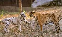 delhi zoo reopens