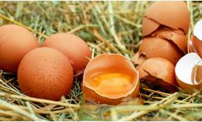 World Egg Day: Experts highlight importance of eggs to boost immunity