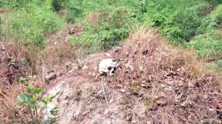 Bihar AES death