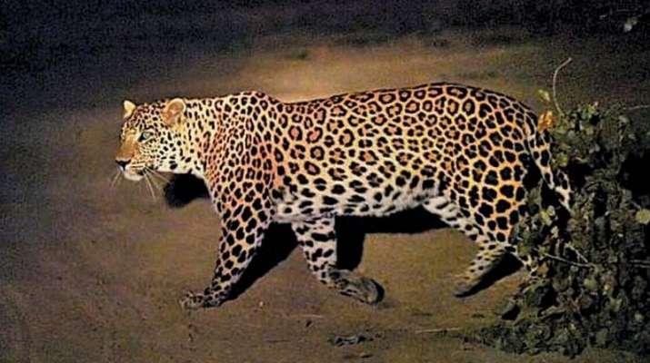 Leopard killed inside Uttarakhand medical college